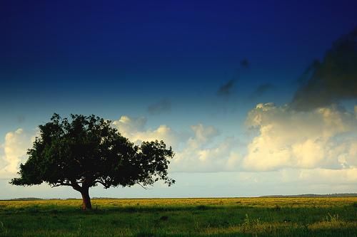 InformácieHlasovanie o Strom roka 2013 je odštartované