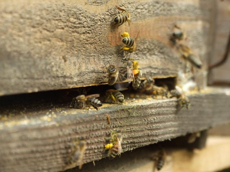 InformácieŽivica priniesla do mesta včely