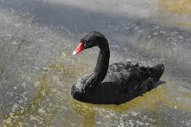 PonukyHľadá sa redaktorka/redaktor pre portál Čierna labuť